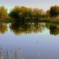 Лесное озеро :: Нэля Лысенко