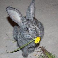 кролик Васёк :: Ирина