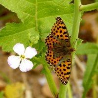 цветы и бабочки 4 :: Александр Прокудин