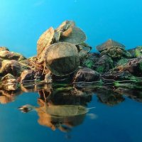 Остров черепах :: Ирина Via
