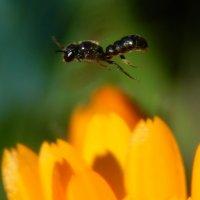 Прыжок над цветком :: Валентина Пирогова