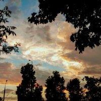 деревья на закате :: Александр Прокудин
