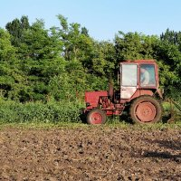 Пора копать картошку в огороде :: Валентина