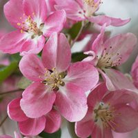 Ушедшая весна :: Наталия Григорьева
