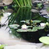 В Ботаническом саду :: Лана Коробейникова