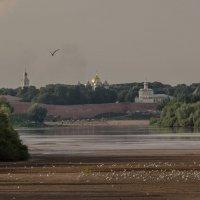 Стая чаек и вдали виден Великий Новгород :: Олег Фролов