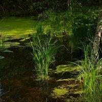 Луч света на болотце :: Алексей (GraAl)