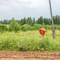 телефонная будка в России :: Nikolai_ _