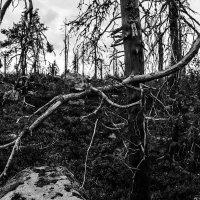 Эти странные деревья :: Nika Polskaya