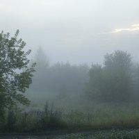 «Утро туманное». :: Вадим Басов