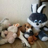 Семейное фото :: виктор ушаков