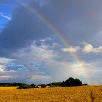 Радуга над хлебным полем. :: Борис Митрохин