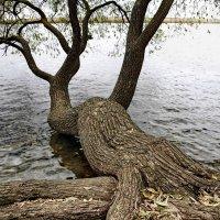 Деревья. :: Liudmila LLF