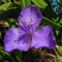 цветок IMG_1265 :: Олег Петрушин