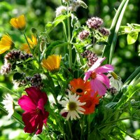 Неприхотливые цветочки радуют на даче! :: irina