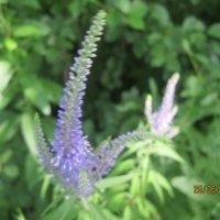 цветок :: Smit Maikl