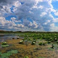 Облака над озером :: Алексей Поляков