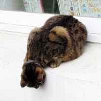 Кіт побачив мишку :: Степан Карачко
