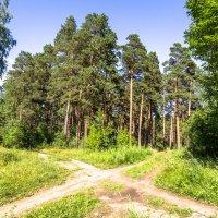 лесными тропами :: Василий Иваненко