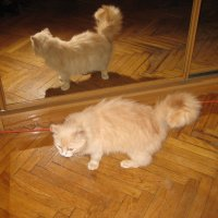 А кто там в зеркале? :: alexeevairina .