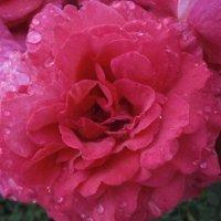 Дождь прошёл ... :: Алёна Савина
