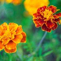 Цветы в ожидании осени :: Ayse 1