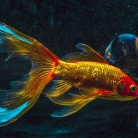 Золотая рыбка в космосе :: Екатерина Яицкая
