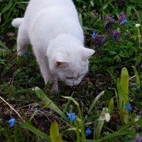 Как вкусно пахнут цветочки :: san05 -  Александр Савицкий