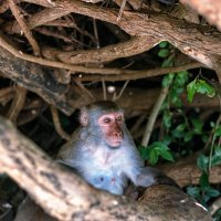 Житель острова обезьян :: Мария Вишнева