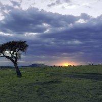 Доброе утро Африка! :: Адель