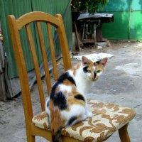 кошка и стул :: Назар