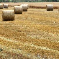 Урожайная лирическая   Русское поле :: олег свирский