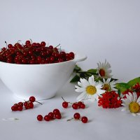Красная смородина :: Лидия Суюрова