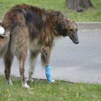 пораненная лапка :: Наталия П