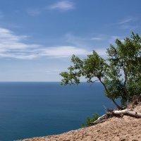 И на песке растут деревья :: Александр Крупский