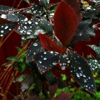 После дождя :: Tanja Gerster
