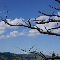 Такое дерево... :: Наталия Григорьева