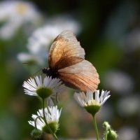 воздушная фея :: Alisa Koteva