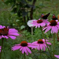 Коктейль из цветов и бабочек. :: Татьяна Помогалова