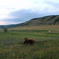 На лугу пасутся кони :: Горкун Ольга Николаевна