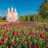 Чесменская церковь :: Владимир Колесников