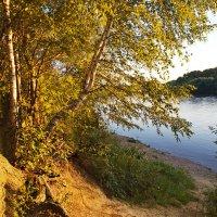 В золотистых лучах закатного света :: Константин Тимченко