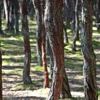 Танцующий лес :: Леонид leo