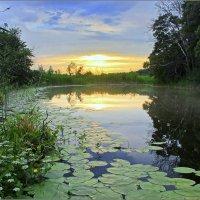 Царство кувшинок и глади воды :: Максим Минаков