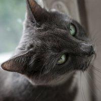 Кошка :: Вадим Жирков