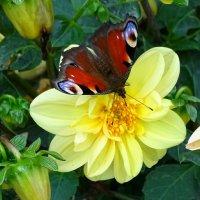 Природные краски флоры и фауны :: Милешкин Владимир Алексеевич