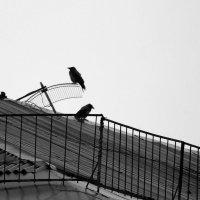 Вороны - страшная сила! :: Кулага Андрей Андреевич