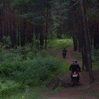 Нарушители лесной тишины. Впрочем, госномер видно. :: Михаил Полыгалов
