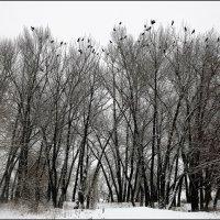Зимний пейзаж :: Юрий ГУКОВЪ