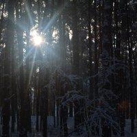сквозь деревья :: Татьяна Лаптева